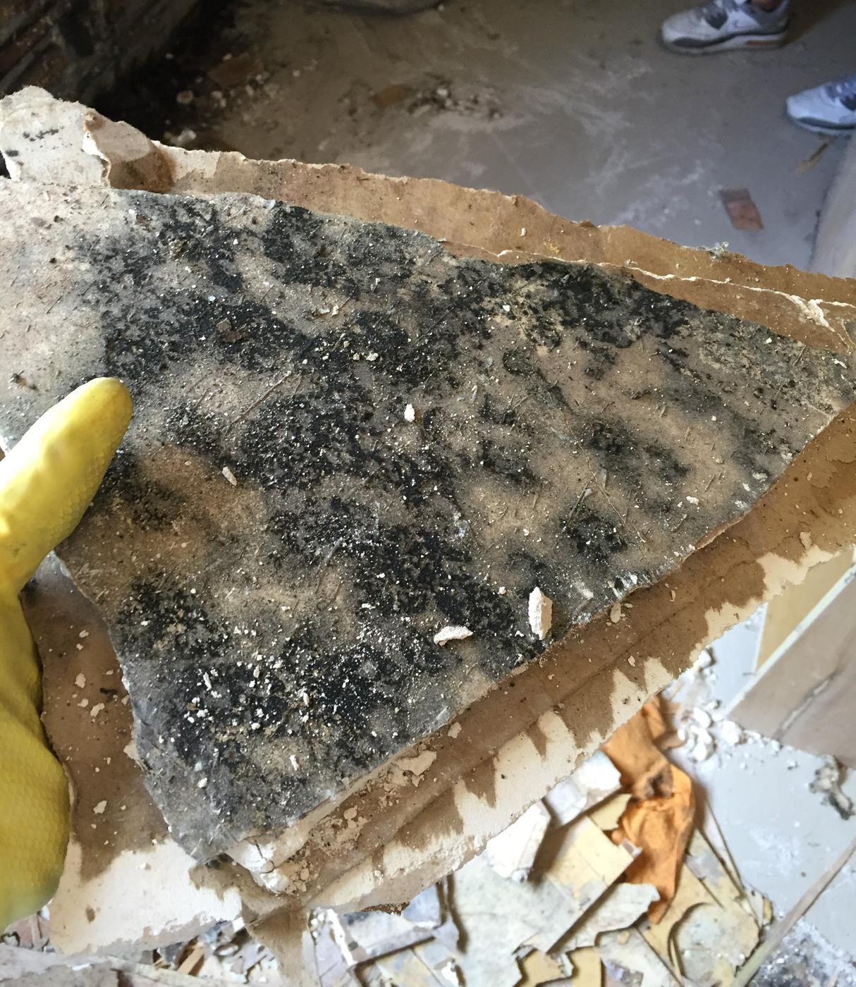 mold from the inside of a drywall from a remediation AdvantaClean did in Miramar, FL