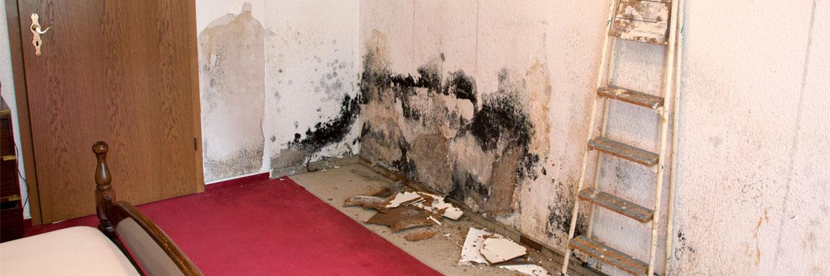 mold and water damage on wall